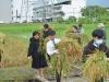 100990 นักศึกษาโครงการผลิตครูเพื่อพัฒนาท้องถิ่น ปี 2561 ลงแขกเกี่ยวข้าว